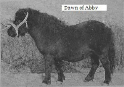Dawn of Abby 1 003